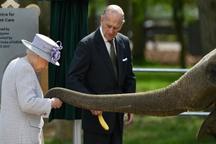 عکس/ ملکه در باغ وحش