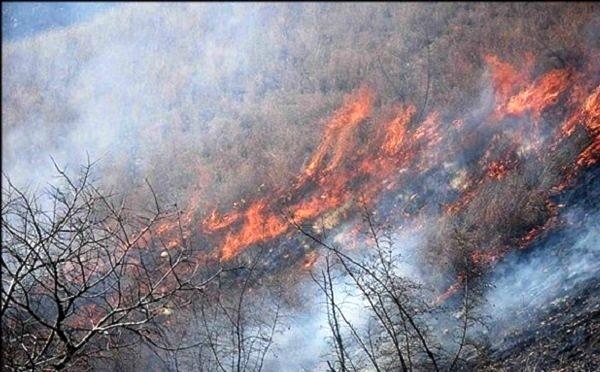 آتشسوزی 270 هکتار از مزارع کشاورزی سرپل ذهاب