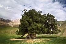 بیست مهر ماه ،بزرگداشت روز ملی البرز، در کرج برگزار می شود