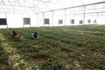 101طرح کشاورزی هفته دولت در کرمانشاه افتتاح می شود
