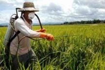 مبارزه با علف های هرز در مزارع غلات شهرستان ری آغاز شد
