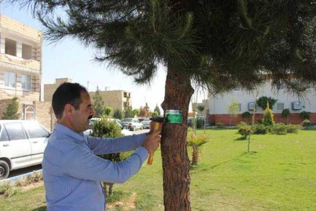 ۲۱ هزار اصله درخت معابر و میادین اصلی سنندج شناسنامه دار شدند