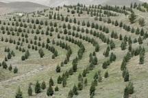 356هکتار جنگل و مرتع در باشت احیا شد
