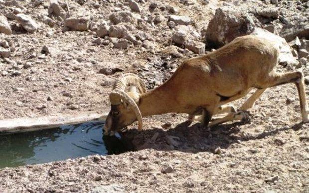 120 هزار لیتر آب در آبشخورهای حیات وحش ایلام توزیع می شود