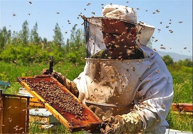 تولید عسل در چهارمحال و بختیاری10درصد افزایش یافت