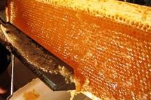 امسال 300 تن عسل در نقده تولید می شود