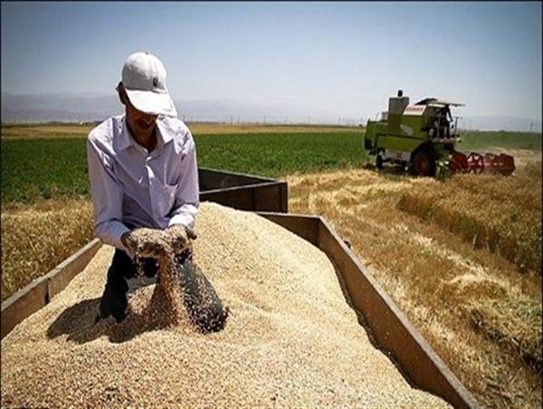 پرداخت ۴۴ درصد از مطالبات گندمکاران استان مازندران