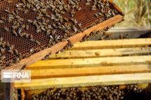 تولید روزانه ۱.۸ تن عسل در شهرکهای صنعتی آذربایجانغربی