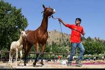 2داور خارجی اسب های اصیل ترکمن را قضاوت می کنند