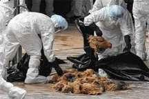 دومین کانون آنفلوانزای فوق حاد پرندگان در یزد شناسایی شد