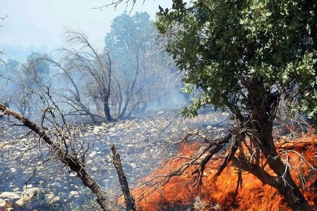 آتش سوزی در جنگل های بلوط اندیکا مهار شد
