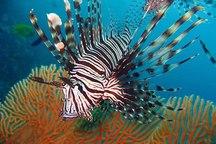 عجیب ترین ماهی های دنیا/ فیلم