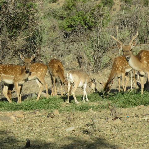 اکوتوریسم ظرفیتی برای افزایش درآمد گردشگری شهرستان خاتم است