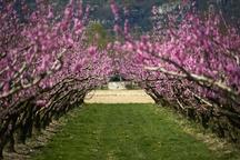 عکس/ درختان و شکوفه ها