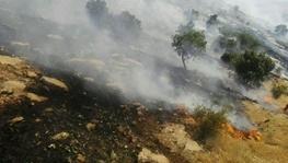 آتش دلای اندیکا تحت کنترل است  بروز آتش سوزی در اودیب