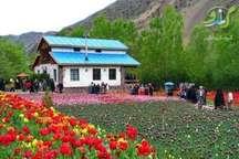 بیش از 50 درصد گل لاله کشور در البرز تولید می شود