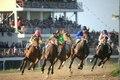 هفته دوم کورس پاییزه آق قلا  با حضور 59راس اسب برگزار می شود