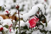 بهاری با رخسار زمستانی