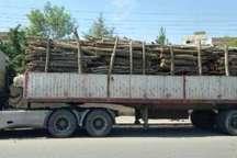 172 اصله چوب جنگلی قاچاق در آستارا کشف شد