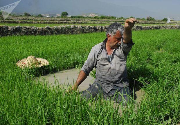 پرداخت افزون بر 100 میلیاردریال تسهیلات بخش کشاورزی در آستانه اشرفیه