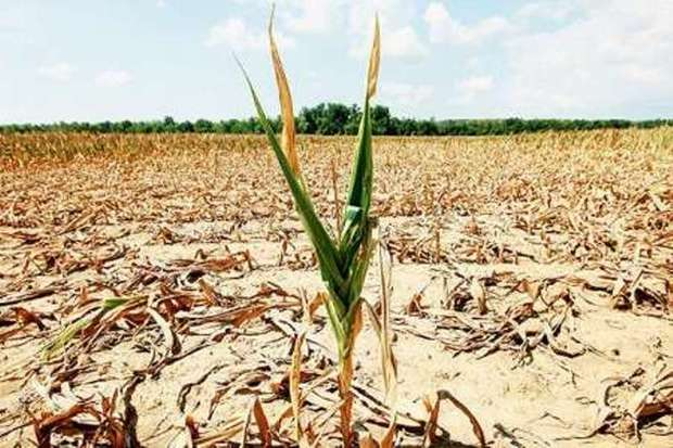 سیل 1622 میلیارد ریال به بخش کشاورزی آذربایجان شرقی خسارت زد