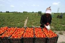 لزوم ایجاد صنایع تبدیلی کشاورزی در استان کردستان