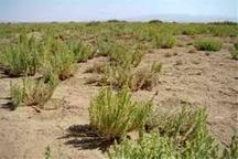 13 هزار هکتار از اراضی ملارد بیابان زدایی شد