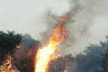 گردشگران طبیعت از افروختن آتش روی زمین خودداری کنند