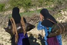 1500 خانوار عشایری گچساران با بحران کم آبی مواجهاند