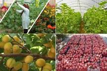 جایگاه نهم یزد در سطح ملی از لحاظ تولید محصولات کشاورزی