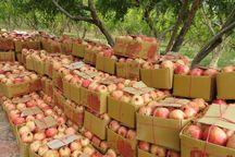 سالانه ۶۲۰۰ تن انار در آذربایجانشرقی تولید میشود