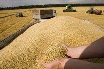 45 مرکز خرید محصولات کشاورزان در لرستان دایر شد