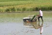 کشت مکانیزه برنج ارگانیک در مازندران سه برابر شد