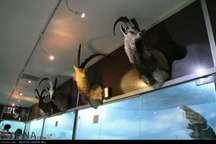 بازدید از موزه تاریخ طبیعی لرستان رایگان شد
