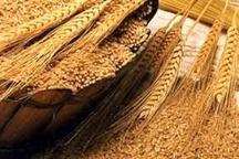 کسب مقام برتر کشوری در تولید بذور اصلاح شده غلات توسط جهاد کشاورزی زنجان  تولید سالانه 18هزار تن بذر اصلاح شده در استان