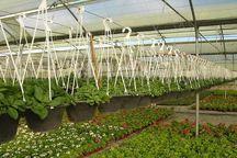  پرداخت تسهیلات به طرحهای گلخانهای دربانک کشاورزی اردبیل شتاب میگیرد