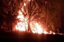 حریق نخلستان یک میلیارد ریال به کشاورز دلگانی خسارت زد