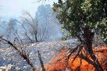 یک هکتار از جنگل های دز در آتش سوخت
