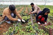 ۳۱۰ میلیارد ریال وام اشتغال روستایی در شهرستان ری پرداخت شد