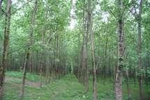 آغاز درختکاری در بیش از چهارهزارو 500هکتار از اراضی مازندران