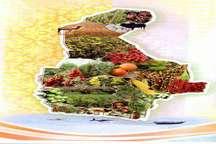 کشاورزی ایرانشهر ظرفیت خوبی برای ایجاد اشتغال در منطقه است