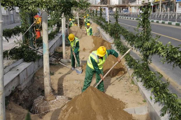 درختان چنار، هویت تهران هستند / ۱۱۰۰ اصله چنار درخیابان ولیعصر(عج) غرس خواهیم کرد
