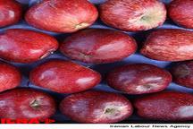 صادرات سیب ایران به کشورهای اروپایی با برند کشور لبنان صورت میگیرد