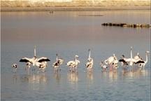 کوچ20 گونه پرنده مهاجر به تالاب بیشه دالان