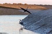 سد شهید شاهچراغی دامغان استراحتگاه پرندگان مهاجر