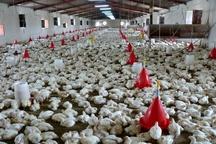 ۲۰۱۰ طرح در بخش کشاورزی سیستان و بلوچستان تسهیلات دریافت کردهاند