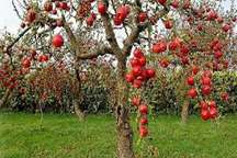 مراحل اداری استانی ثبت ملی باغ سیب انجام شد
