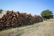 قاچاقچیان چوب های جنگلی در سپیدان دستگیر شدند