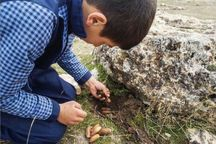 ۵۰۰کیلوگرم بذر درختان جنگلی در خانمیرزا کشت شد