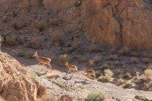 ارتقا گستره مناطق حفاظت شده استان بوشهر دستور کار است
